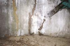 Kansas city termite inspections